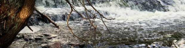 Fanny Hooe Creek