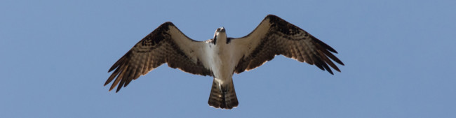 Spectacular Bird Migration