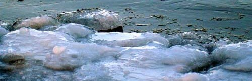 Shore Ice