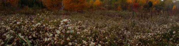 Fall colors hang on