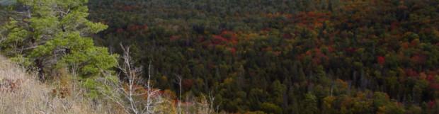 Fall Color Progression