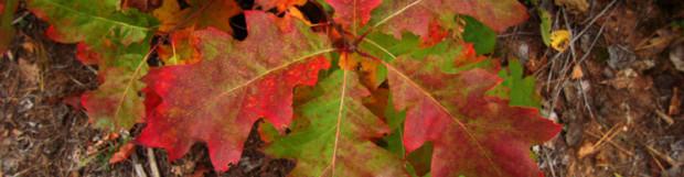 Autumn Leaves!