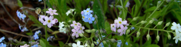 Early Spring Wildflowers