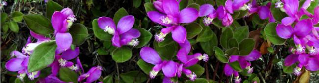 Exquisite Wildflowers